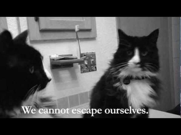 Internet Cat Film Festival – intre amuzament si experiment, la un fir de par distanta